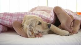 Ортопедическое основание для кровати — гарантия качества сна и долговечности матраса