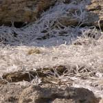 Морская трава (водоросли)