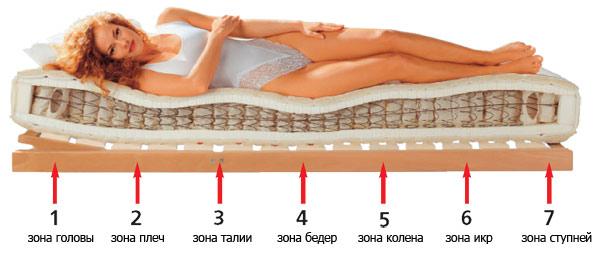 зоны тела на ортопедическом матрасе