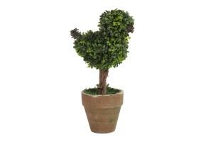 roomble растения
